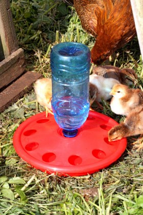 Chick disc bottle holder drinker