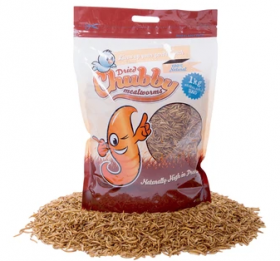 Chubby Mealworms - 1kg